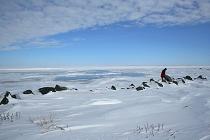 arcticc