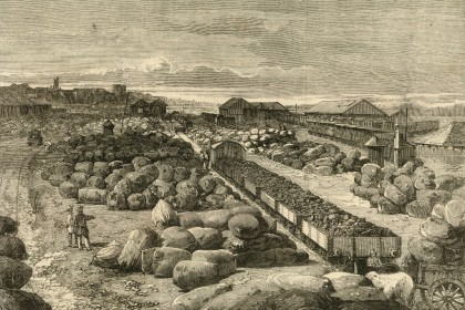 3.1. Cotton bales lying at Bombay terminus  Photo Dr. Jehangir S. Sorabjee - Copy